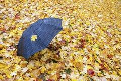 Ensamt paraply och lönnlöv på hösten arkivfoton