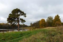 Ensamt sörja och träd med orange lövverk på flodbanken Arkivbild