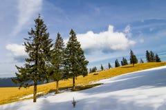 Ensamt sörja träd i ljus vinterdag Arkivfoton