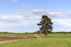 Ensamt sörja trädet Arkivfoton