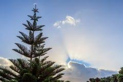 Ensamt sörja trädet med härlig bakgrund för blå himmel Arkivfoton