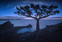 Ensamt sörja trädet mot mikly väg royaltyfri bild