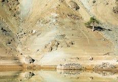 Ensamt sörja trädet på en lutning av ett berg Arkivbild