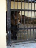 ensamt SAD för björn Arkivbilder