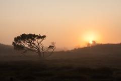 Ensamt skew-pust träd på äng i ottasoluppgången med solen som skiner till och med dimma Arkivfoto