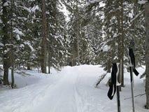 Ensamt skidar poler på väntar skidåkaren i en pinjeskog Hoch-Ybrig, Schweiz fotografering för bildbyråer
