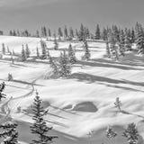 Ensamt skidar spåret på den hjärt- kanten Wyoming Royaltyfria Foton