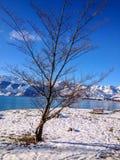 Ensamt snöträd Royaltyfria Foton