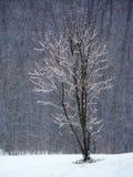 Ensamt strandsatt litet träd, is som täckas i vinter Fotografering för Bildbyråer