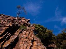 Ensamt träd överst av berget Royaltyfri Fotografi