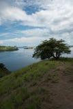 Ensamt träd överst av en kulle vid havet Singapore Arkivfoto