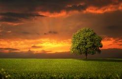 Ensamt träd Arkivbild
