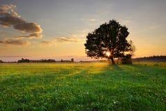 Ensamt träd Arkivfoton