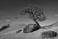 Ensamt träd arkivbilder