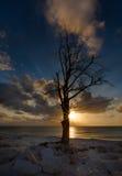 Ensamt träd. Arkivbild