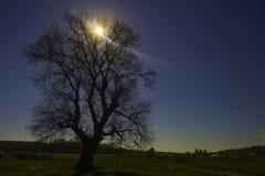Ensamt träd Fotografering för Bildbyråer