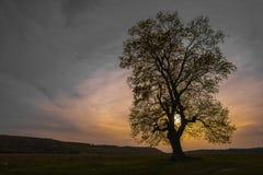 Ensamt träd Arkivfoto