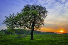 Ensamt träd Royaltyfri Bild