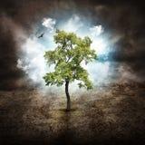 Ensamt träd av hopp på torrt land Arkivbild