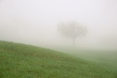 Ensamt träd bak en kulle i dimman Arkivbilder