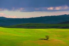 Ensamt träd bland ett fält Fotografering för Bildbyråer