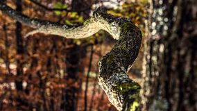 Ensamt träd, dramatisk effekt Arkivbild