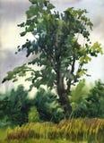 Ensamt träd för bild` i molnig dag`, Papper vattenfärg Royaltyfria Foton