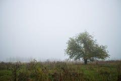 Ensamt träd för landskap Arkivfoto
