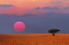 Ensamt träd för solnedgång Arkivbild