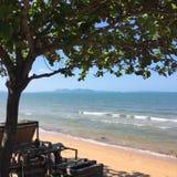 Ensamt träd för ställning och havet arkivfoto