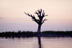 Ensamt träd i Amarapura, Mandalay uppdelning, Myanmar Arkivfoton