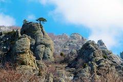 Ensamt träd i bergen Arkivfoto
