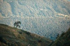 Ensamt träd i bergen Arkivbilder