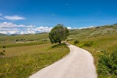 Ensamt träd i bergen av Montenegro Royaltyfria Foton