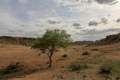 Ensamt träd i bergen Baga Gazriin Chuluu Arkivfoto