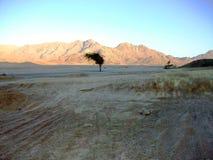 Ensamt träd i den egyptiska öknen arkivbilder