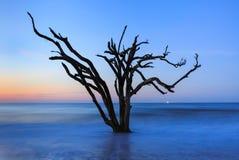 Ensamt träd i den havEdisto ön södra Carolina Botany Bay arkivbilder