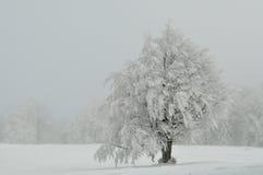 Ensamt träd i den kalla vinterdagen Arkivfoton