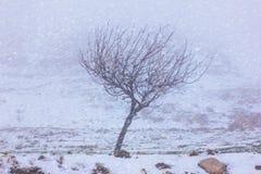 Ensamt träd i det snöig vädret för kall häftig snöstorm Fotografering för Bildbyråer