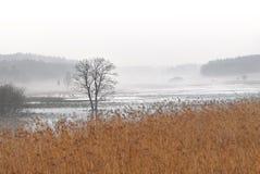 Ensamt träd i dimma Fotografering för Bildbyråer