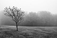 Ensamt träd i dimma Royaltyfria Bilder