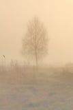 Ensamt träd i dimma Arkivbilder