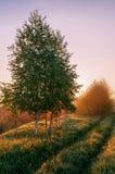 Ensamt träd i dimmig morgon för försommar på soluppgång arkivbild