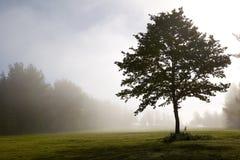 Ensamt träd i en kylig morgon Royaltyfria Foton