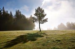 Ensamt träd i en kylig morgon Royaltyfri Fotografi