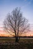 Ensamt träd i en sikt av den färgrika solnedgången Royaltyfri Fotografi