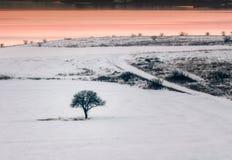 Ensamt träd i ett fält på solnedgången, vintersäsong Royaltyfria Bilder