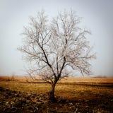 Ensamt träd i ett vinterlandskap Arkivfoto