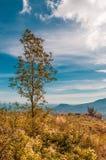 Ensamt träd i fält med bergbakgrund och blå himmel royaltyfri fotografi