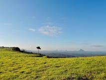 Ensamt träd i glashusberg fotografering för bildbyråer